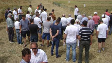 Nagy jövő előtt állhat a durumbúza termesztése