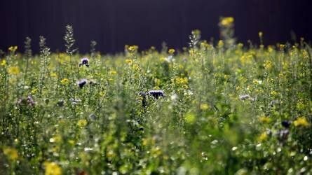 Zöldtrágyázás, mint a zöldítés legegyszerűbb módja