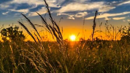 Hűvös idő kíséri az aratást a következő napokban is - csapadék is lesz