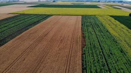 Csak a támogatás miatt vetünk zöldtrágya növényeket vagy kihasználjuk a pozitív hatásaikat is?