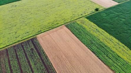 Július első napjaiban zavartalan lesz az aratás