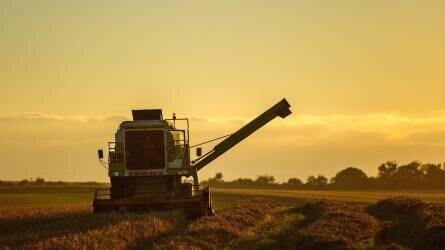Majdnem nyolcmillió tonna az idei kukoricatermés