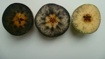 Utóérő gyümölcsök
