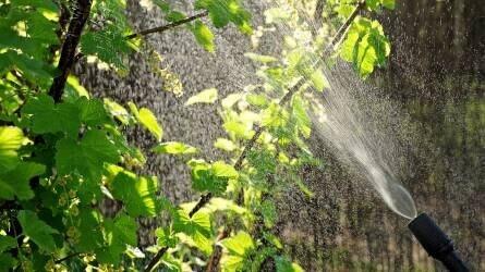 Hogyan keressünk megfelelő növényvédő szert?