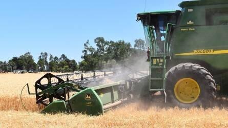 Jó hír a gazdáknak: az időjáráson nem múlik az aratás