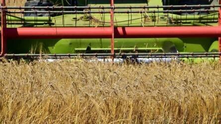 Zuhanó észak-amerikai terményárak – mi lesz itthon?