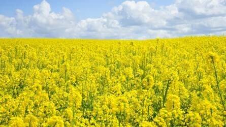 Integrált termesztés a kertészeti és szántóföldi kultúrákban
