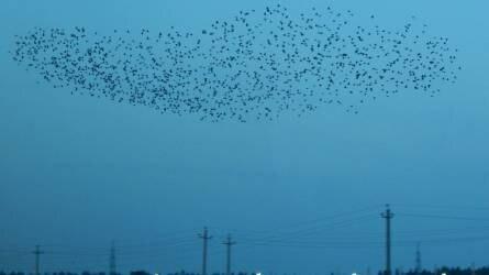 Problémát okoznak a madárriasztó hangágyúk a Balatonnál