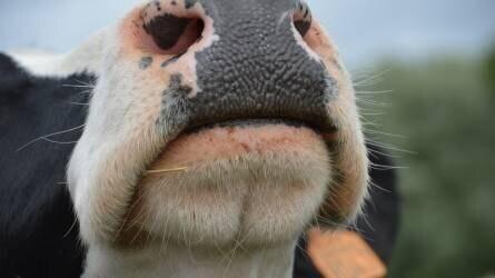 Az Országgyűlés előtt van az új állattenyésztési törvény