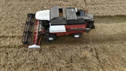 Őszi búza aratás Nemesgörzsönyben Versatile Vector 425 kombájnnal