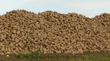 Cukorellátás saját termelésből – érdemes?