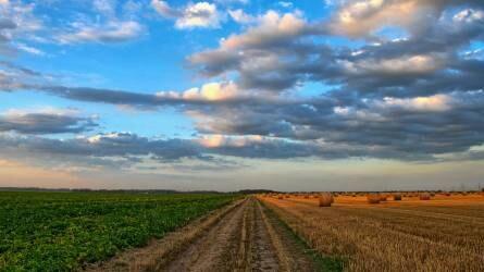 5 trend amely átformálja a mezőgazdaságot