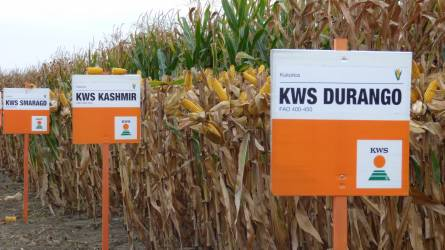 Kukorica hibridek új generációja