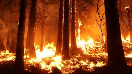 Öt megyében tilos tüzet gyújtani mától