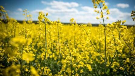 Hogy Önnek is megérje… és a tavaszt is! – Repce Kondi Pack