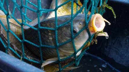 Hiába az áfacsökkentés: nem olcsóbb a hal