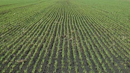 AGRO.bio technológia ajánlata az őszi kalászosok eredményes termesztéséhez