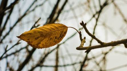 Őszi aktualitás: záró lemosó permetezés