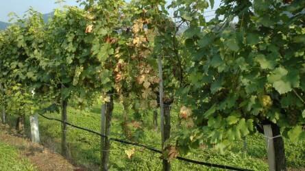 Eredményes a szőlő-bor kutatás-fejlesztési kiválósági központ létrehozása Egerben