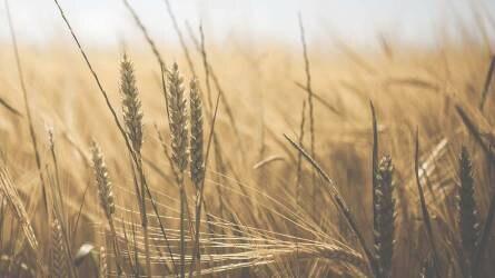 Ha nem tudunk megújulni, baj lesz a gabonaágazatban!