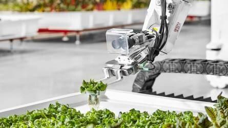 A salátát már robotkertész gondozza