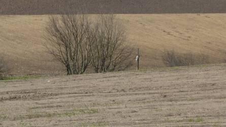 A humusz megóvása talajvédelmi gazdálkodással