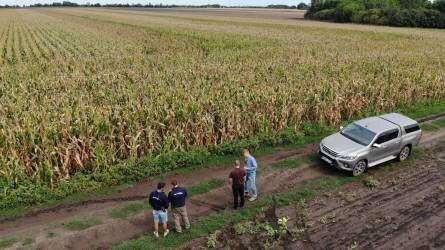 KWS új generációs kukoricahibridek 2019-ben - Gazdavélemények