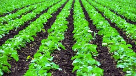 A hazai agráripar külföldi bemutatkozását ösztönzik