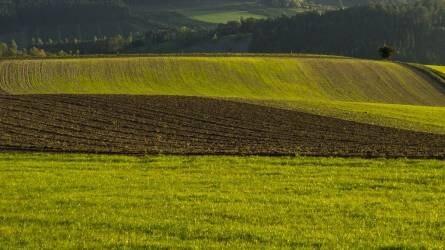 Rekord kukoricahozam Amerikában - A magyar gazdák a búzaterület felét már bevetették