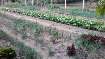 Vetésforgó a kertben (II. rész)