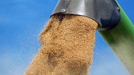 Terménypiac: a búza áralakulása volt a középpontban