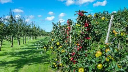 Év végéig lehet bejelenteni az engedély nélkül telepített gyümölcsültetvényeket