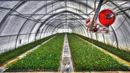 Indukált növényi stressz: a korszerű zöldségtermesztési technológiák szabályozási eszköze