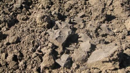 A talaj nem egy korlátlanul rendelkezésre álló erőforrás – tenni kell a védelméért