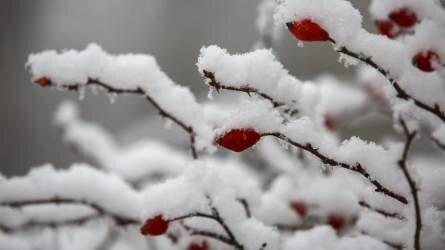 Képek a hóval borított zalai tájakról - Országszerte csapadékos hét áll előttünk
