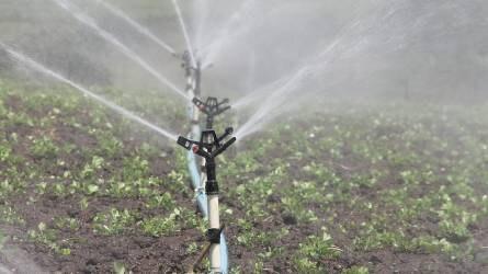 Az öntözés gyakorlata, növényeink vízigénye
