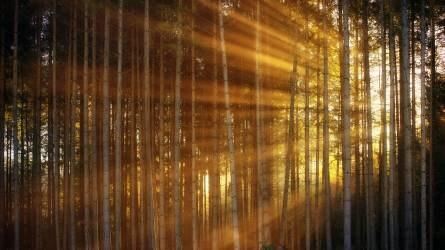 Átfogó uniós intézkedési terv az erdők védelme érdekében