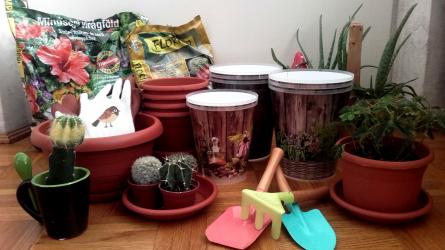 Mire figyeljünk szobanövényeink átültetésénél?