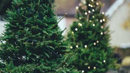 Karácsonyfa-vásárlás I. rész