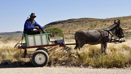 Fityiszt mutatnak a befektetők az afrikai mezőgazdaságnak