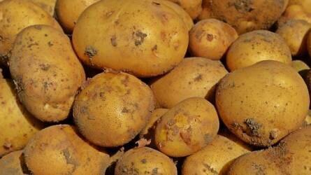 Luxuscikk lehet a sült krumpli!