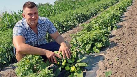Chilis rozé borzselé és társai - Aranyérmes gasztronómiai különlegesség Seregélyesről