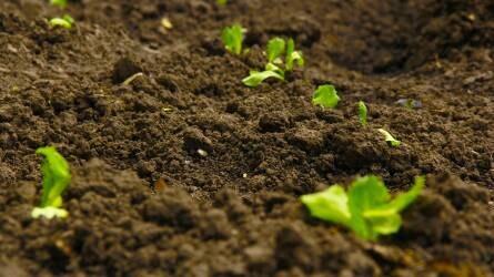 Termőföld: kevesebb cserélt gazdát, de magasabb áron