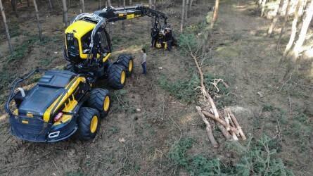 Így dolgozik a magyar erdőkben a legújabb finn fakitermelő gép