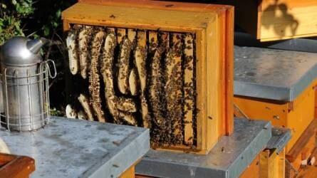 Nagy István: Óriási a szerepe a magyar méhészetnek