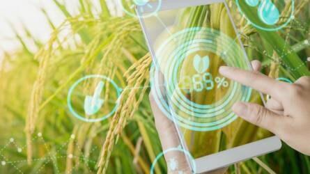 Microsoft: mesterséges intelligenciával a mezőgazdasági problémák megoldásáért