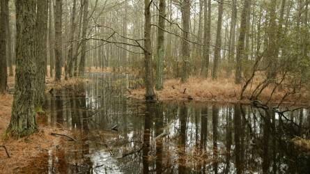 Visszavadítanák a gazdasági célú erdőket