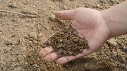 BactoFil® Kalászos az őszi kalászosok termesztés technológiájában