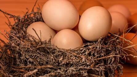 Jelentősen megnőtt az unió tojásimportja