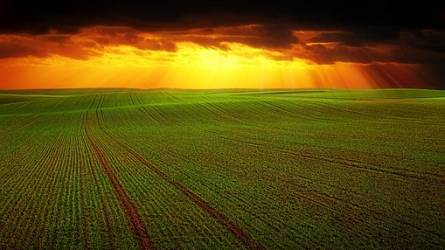 Folyamatosan emelkedik a mezőgazdaság kibocsátása